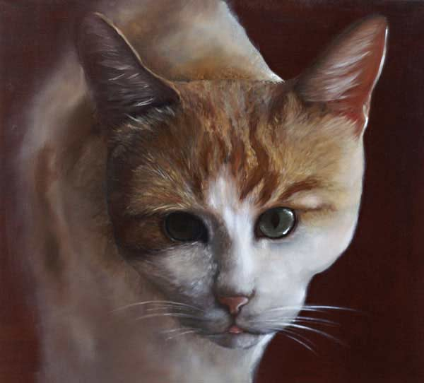 Portrai animalier chat
