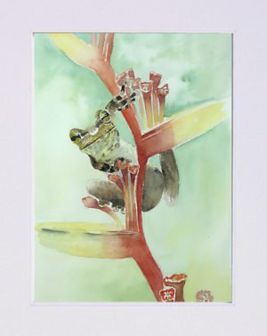 Aquarelle grenouille sur fleur